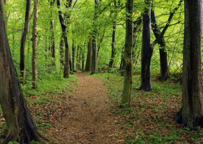 Baum-/ Waldbestattung